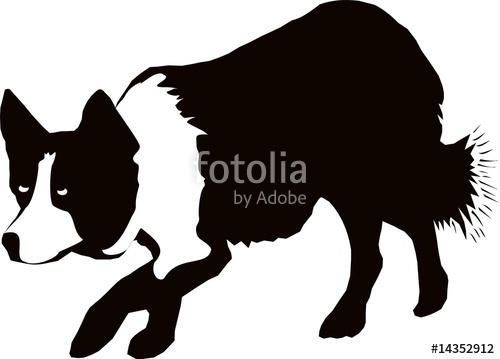 500x359 Border Collie Stalking (Black Amp White) Stock Image And Royalty