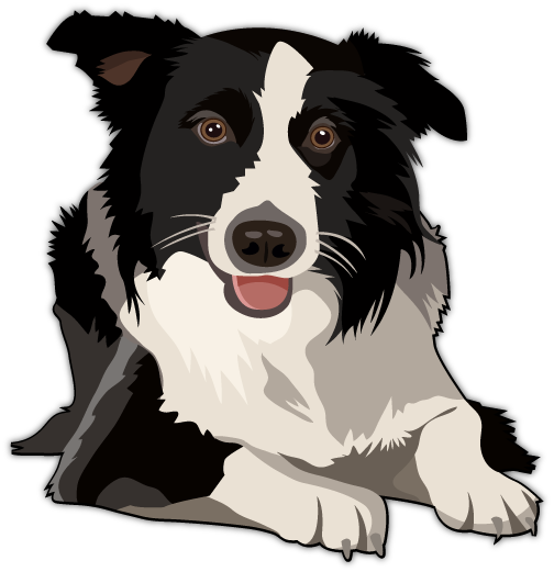 504x521 Border Collie Vector Design Collie, Dog And Animal