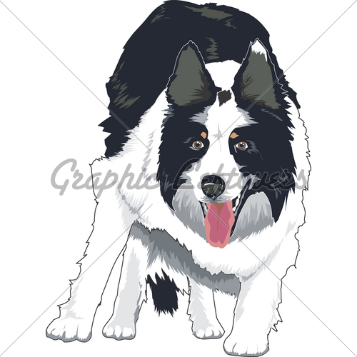 500x500 Border Collie Gl Stock Images