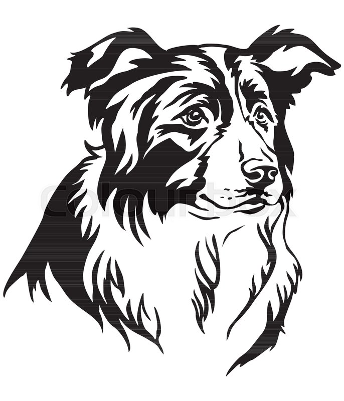 686x800 Decorative Portrait Of Dog Border Collie, Vector Isolated