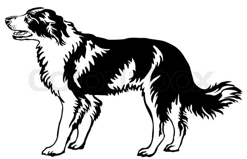 799x514 Decorative Portrait Of Standing In Profile Dog Border Collie