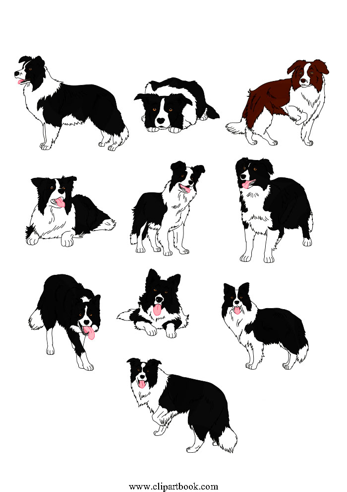 700x990 Download Free Clip Art Vector Realistic Border Collie Dogs