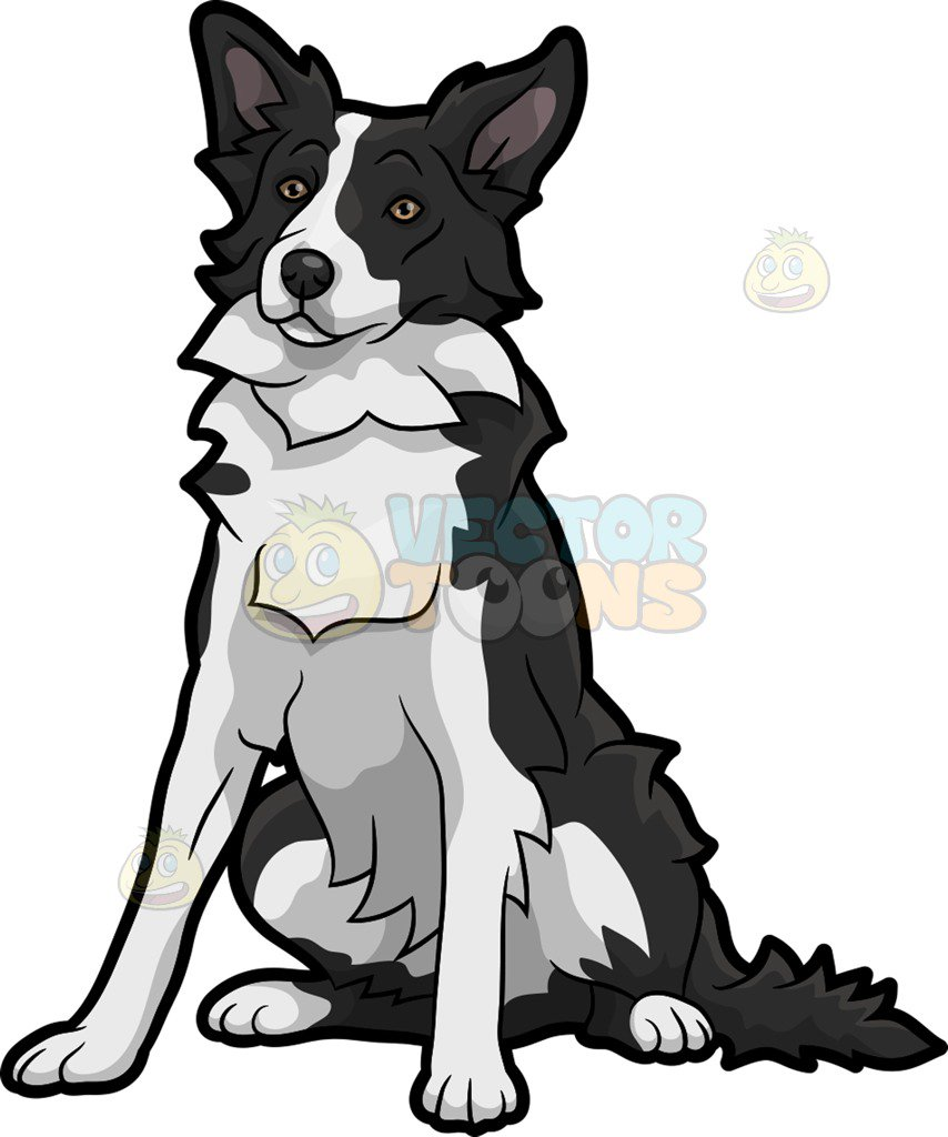 854x1024 A Quiet Border Collie Dog Clipart By Vector Toons