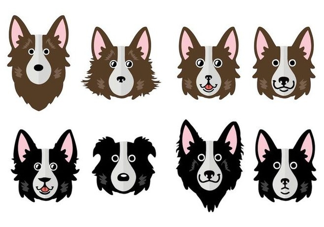 632x443 Free Border Collie Vector Illustration Free Vector Download 411659