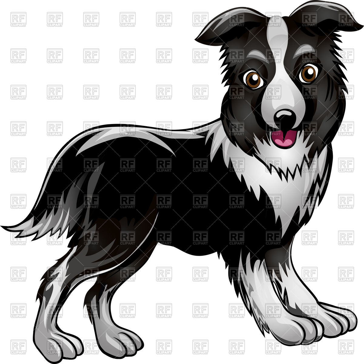 1200x1200 Funny Border Collie Drawn In Cartoon Style Vector Image Vector