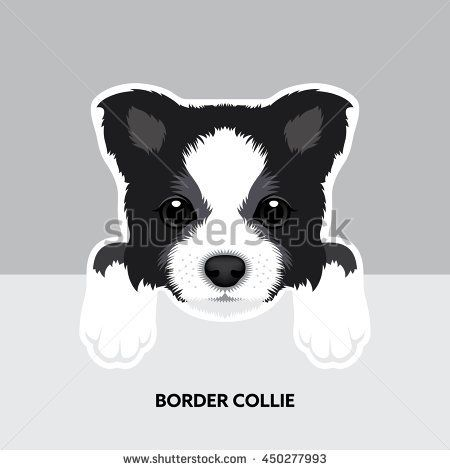 450x470 Vector Illustration Portrait Of Border Collie Puppy. Dog Isolated