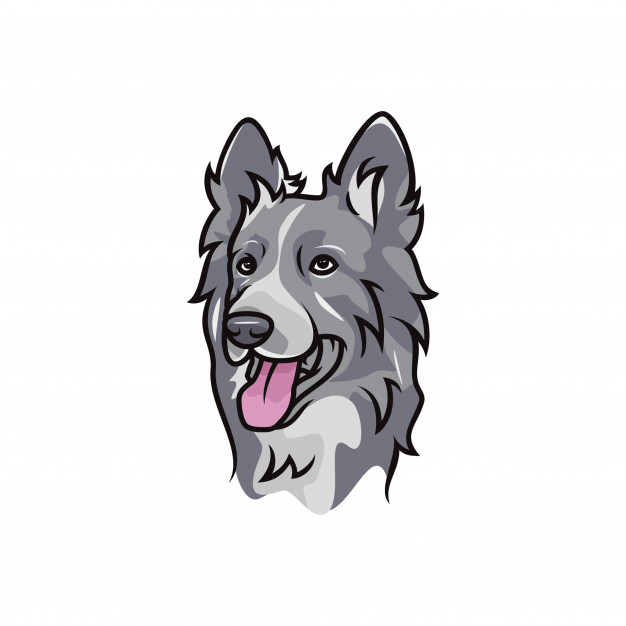 626x626 Border Collie Dog