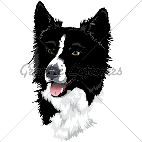 500x500 Border Collie Head Gl Stock Images