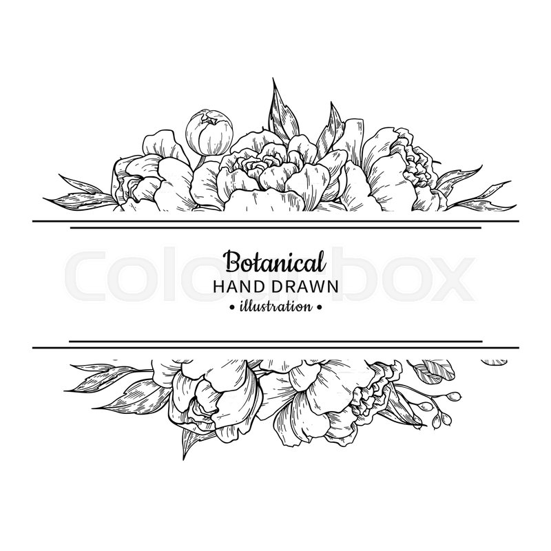800x800 Flower Vintage Border. Vector Peony And Roses Botanical Drawing