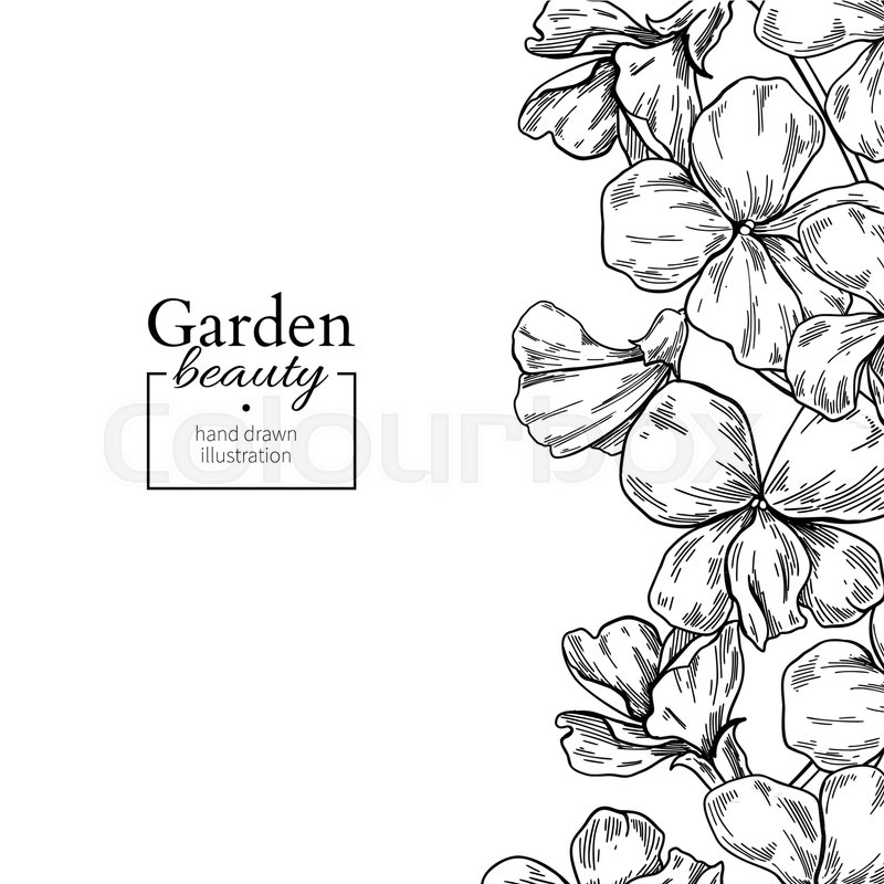800x800 Violet Flower Drawing Border. Vector Hand Drawn Engraved Floral