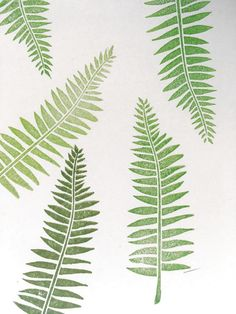236x314 Fern, Botanical Vector Graphics By Grafikboutique On Creative
