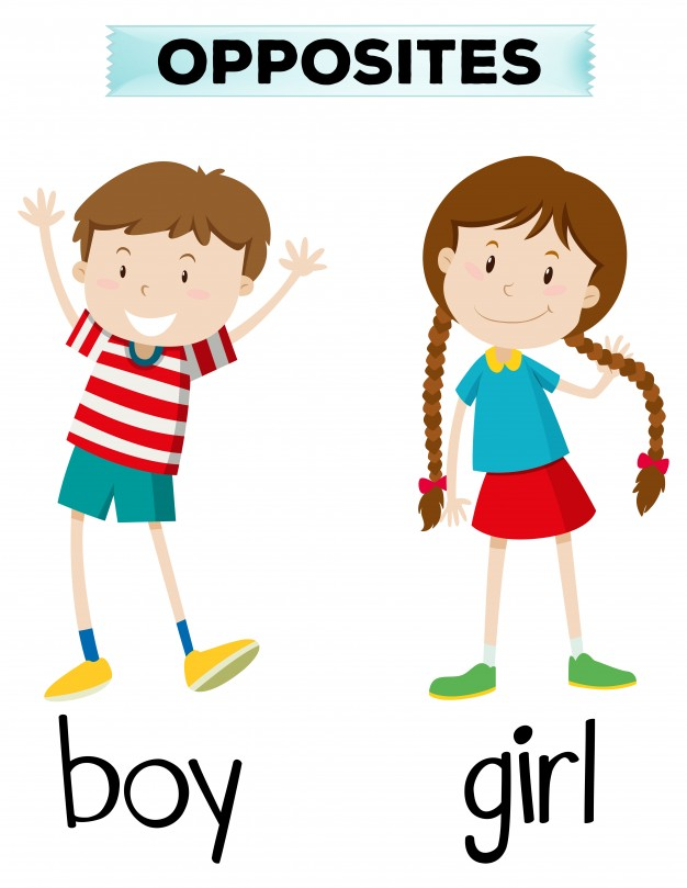 626x809 Opposite Words For Boy And Girl Vector Free Download