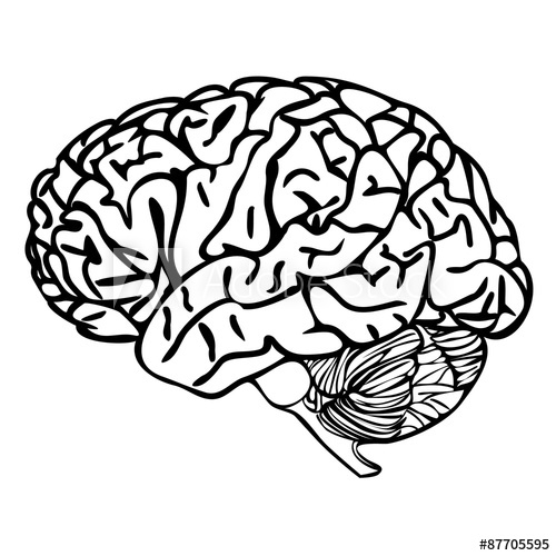 Brain Outline Vector