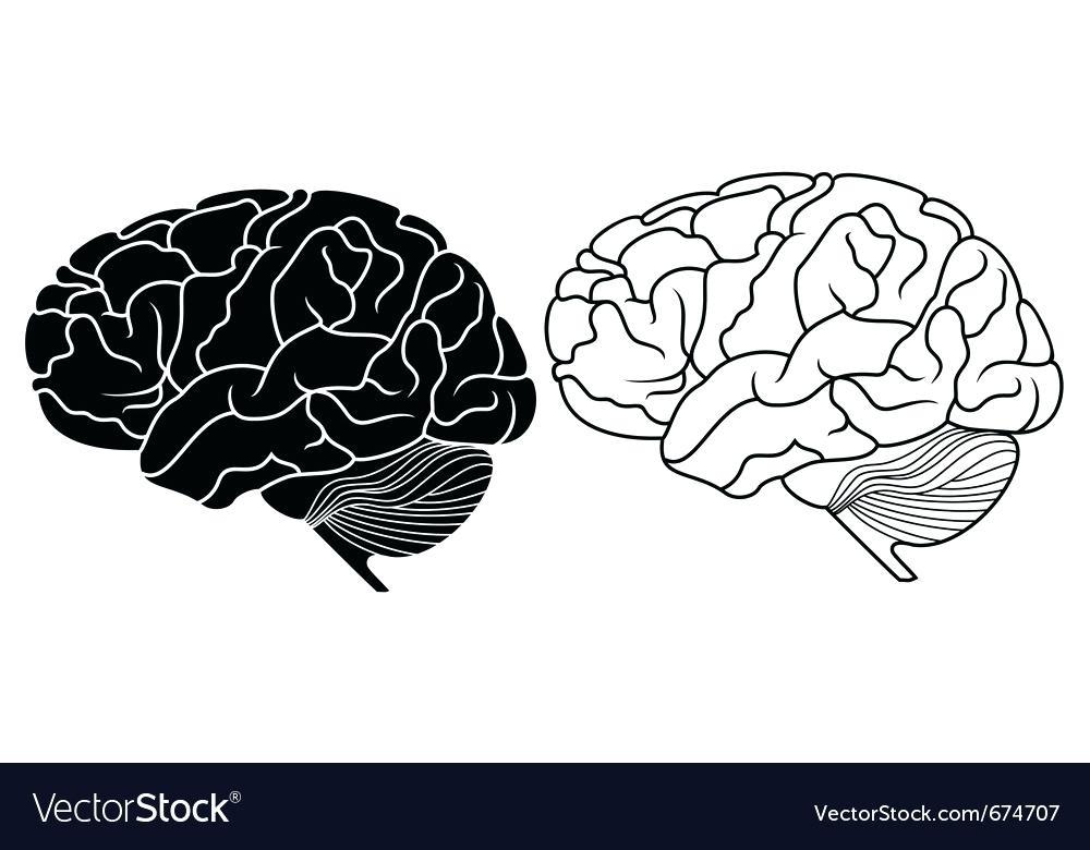 1000x780 Glamorous Brain Vector Astonishing Brain Vector Illustration