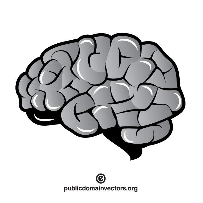 660x660 Brain Vector Clip Art