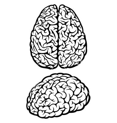 380x400 Brain Vector On Graphic Design Amp Logos