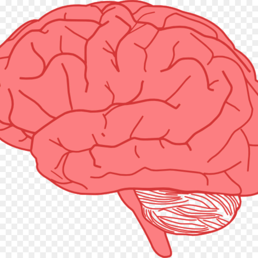 900x900 Clip Art Human Brain Vector Graphics Drawing
