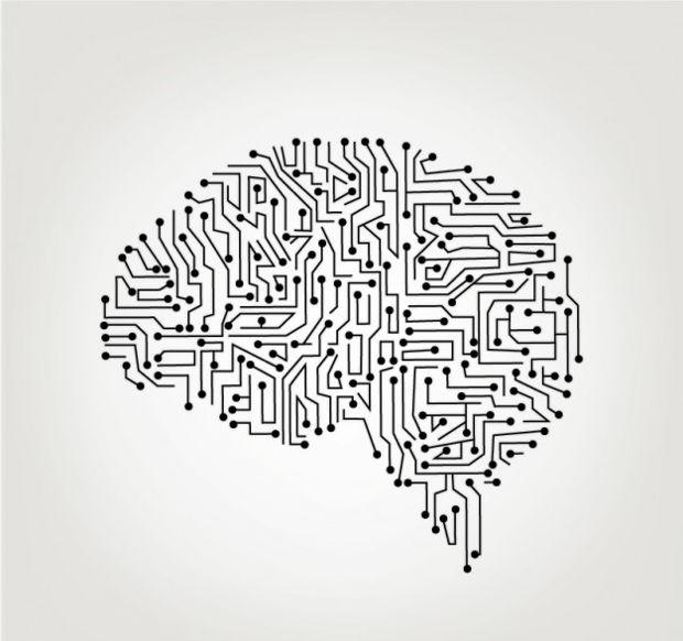 620x582 Human Brain Vectors