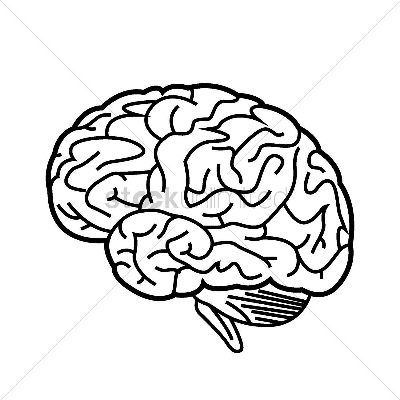 1300x1300 Human Brain Vector Image