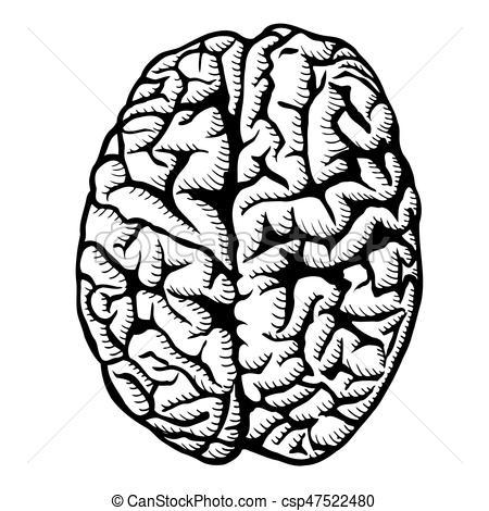 450x470 Human Brain Illustration. Human Brain Vector Illustration Isolated