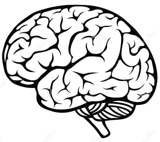 524x463 Brain Vector 5 An Images Hub