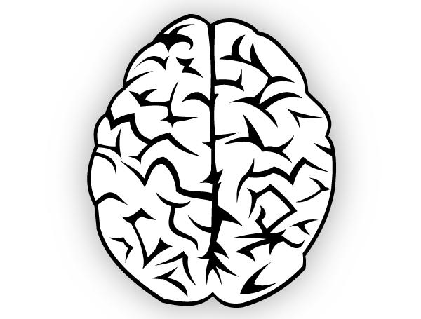 600x455 Brain Vector Free 123freevectors