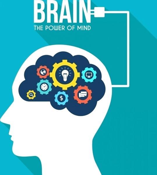 539x600 Excellent Brain Vector Glamorous 9 Flat Simplistic Human Brain