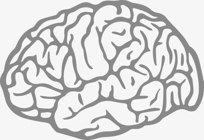 650x446 Vector Brain, Vector, Brain, Head Png And Vector For Free Download