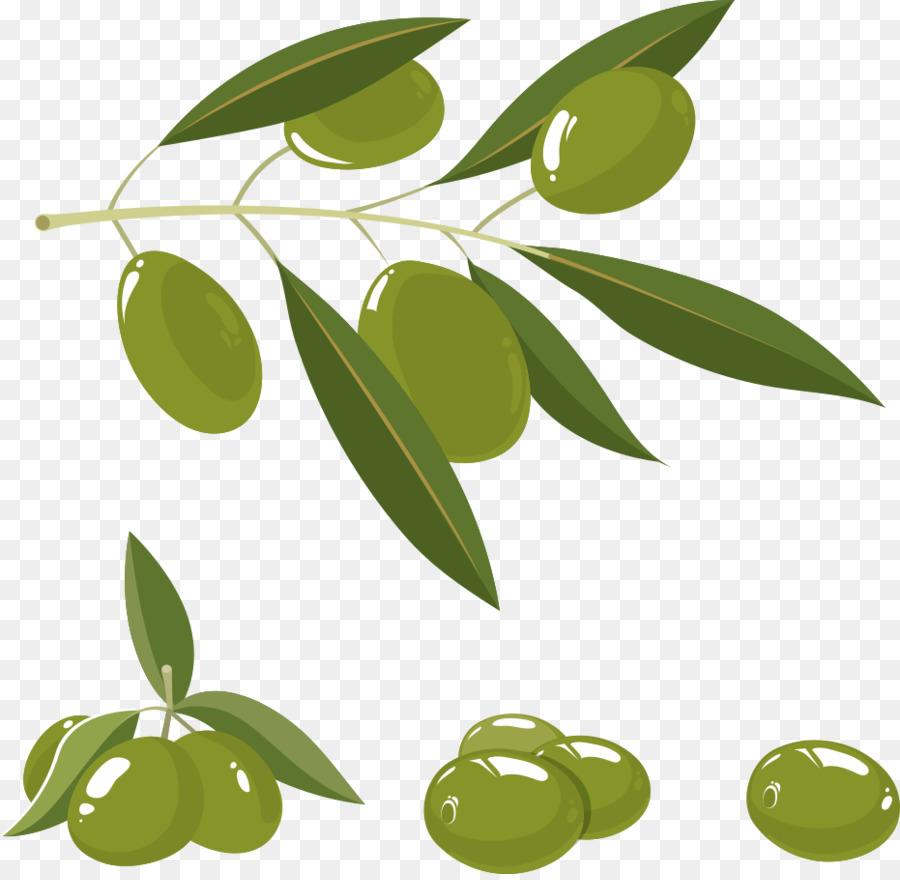 900x880 Olive Oil Olive Branch