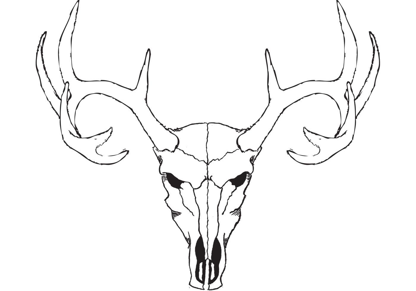 1400x980 Deer Skull Free Vector Art