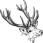 152x150 Free Download Of Deer Head Vector Graphics And Illustrations