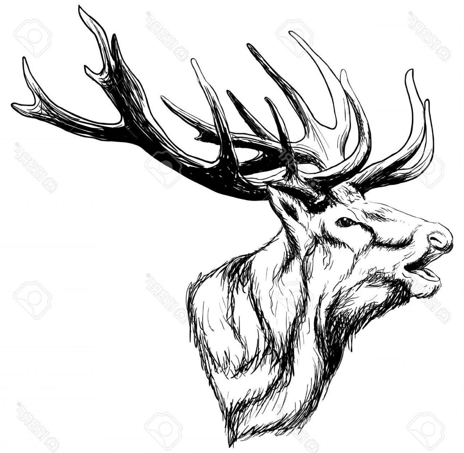 1560x1522 Photostock Vector Hand Drawn Image Of Big White Tail Buck Head