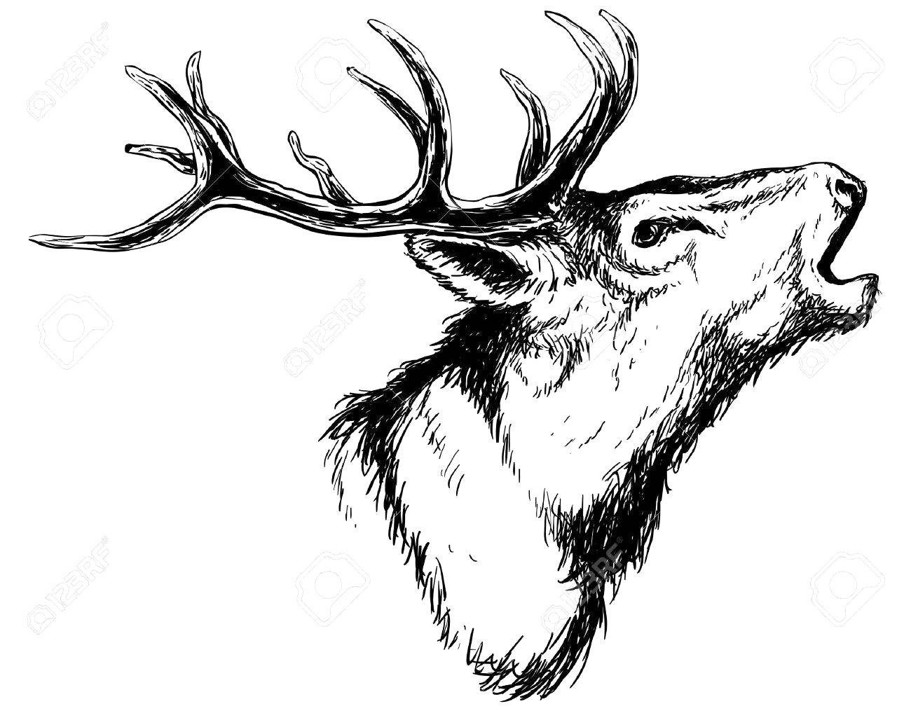 1300x1015 56558253 Hand Drawn Image Of Big White Tail Buck Head With Large