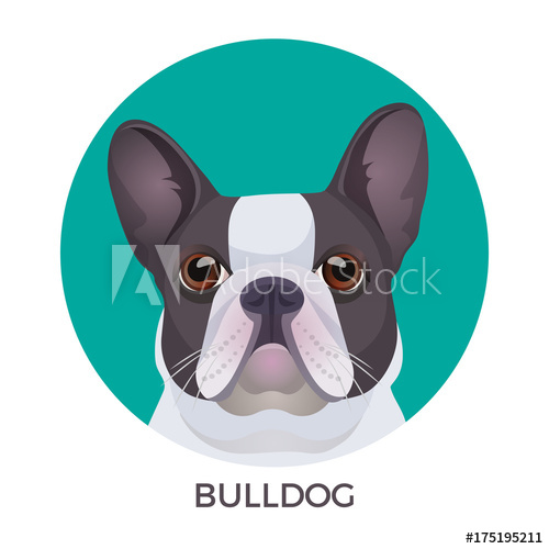 500x500 Bulldog Face Colored In Grey And White Vector Realistic