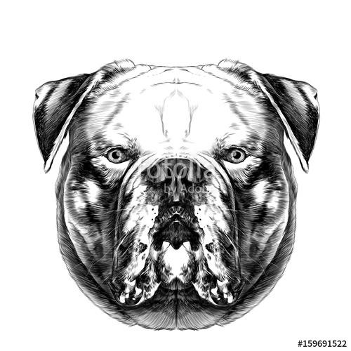 500x500 Dog Breeds American Bulldog Head Symmetry Looks Right Sketch