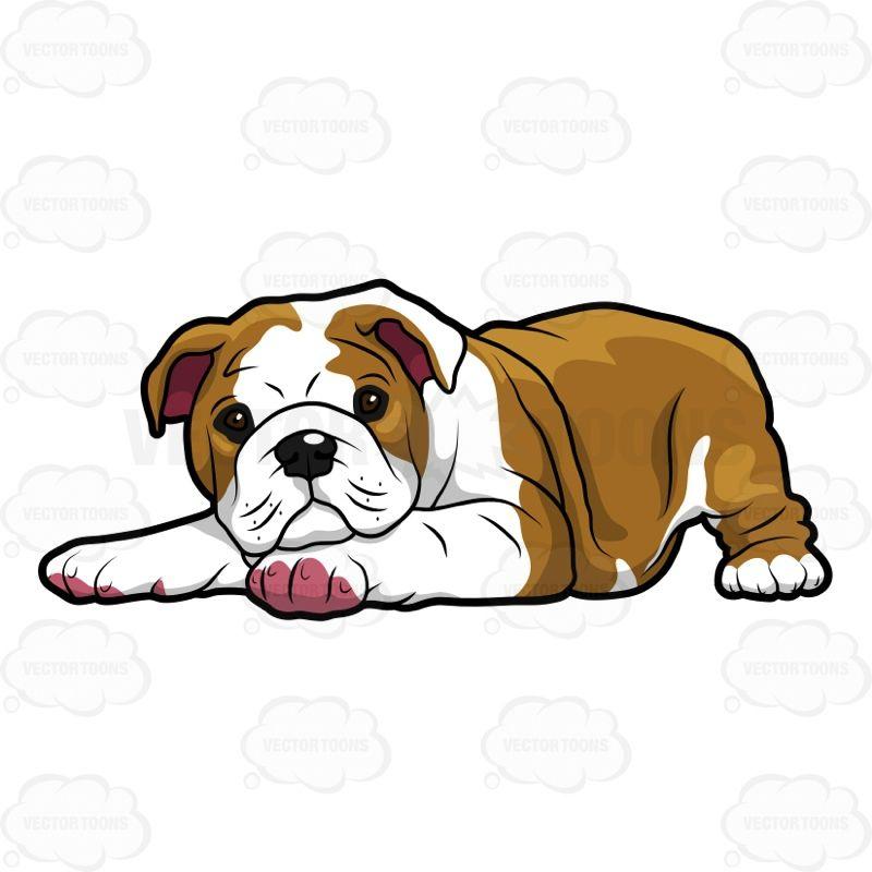 800x800 Bulldog Vector Free Concept Design Home Cute Bulldog Clipart