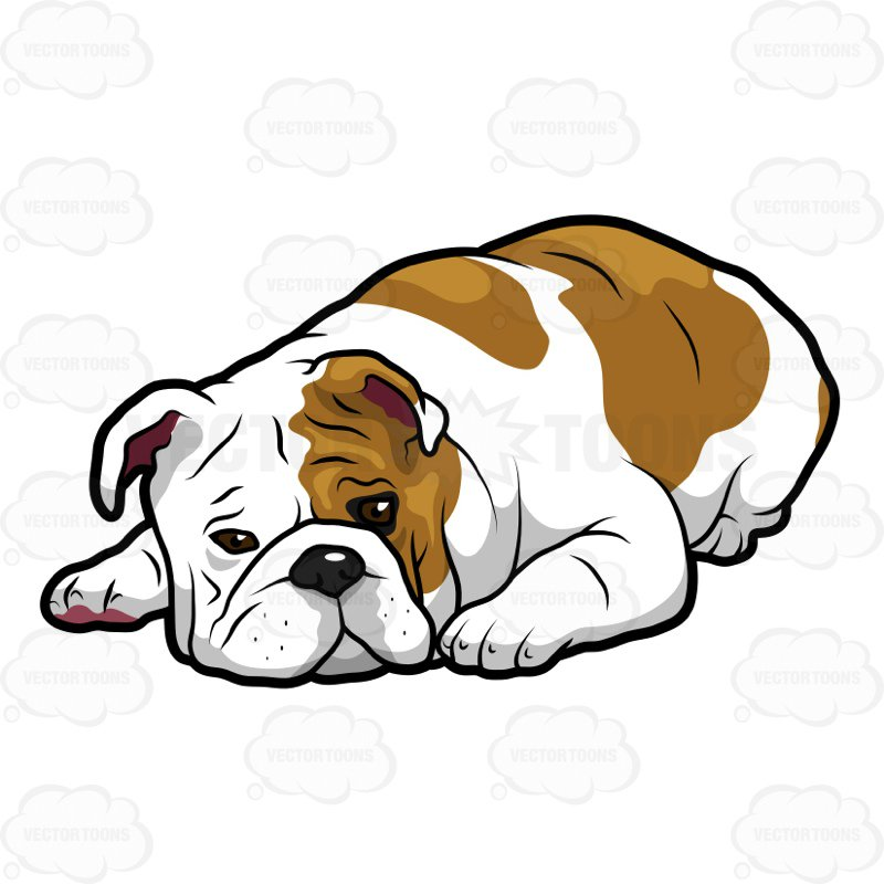 800x800 English Bulldog Lying Down With Its Head On The Floor Clipart By