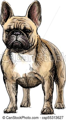 261x470 Beautiful French Bulldog. Hand Drawing Of A Beautiful French