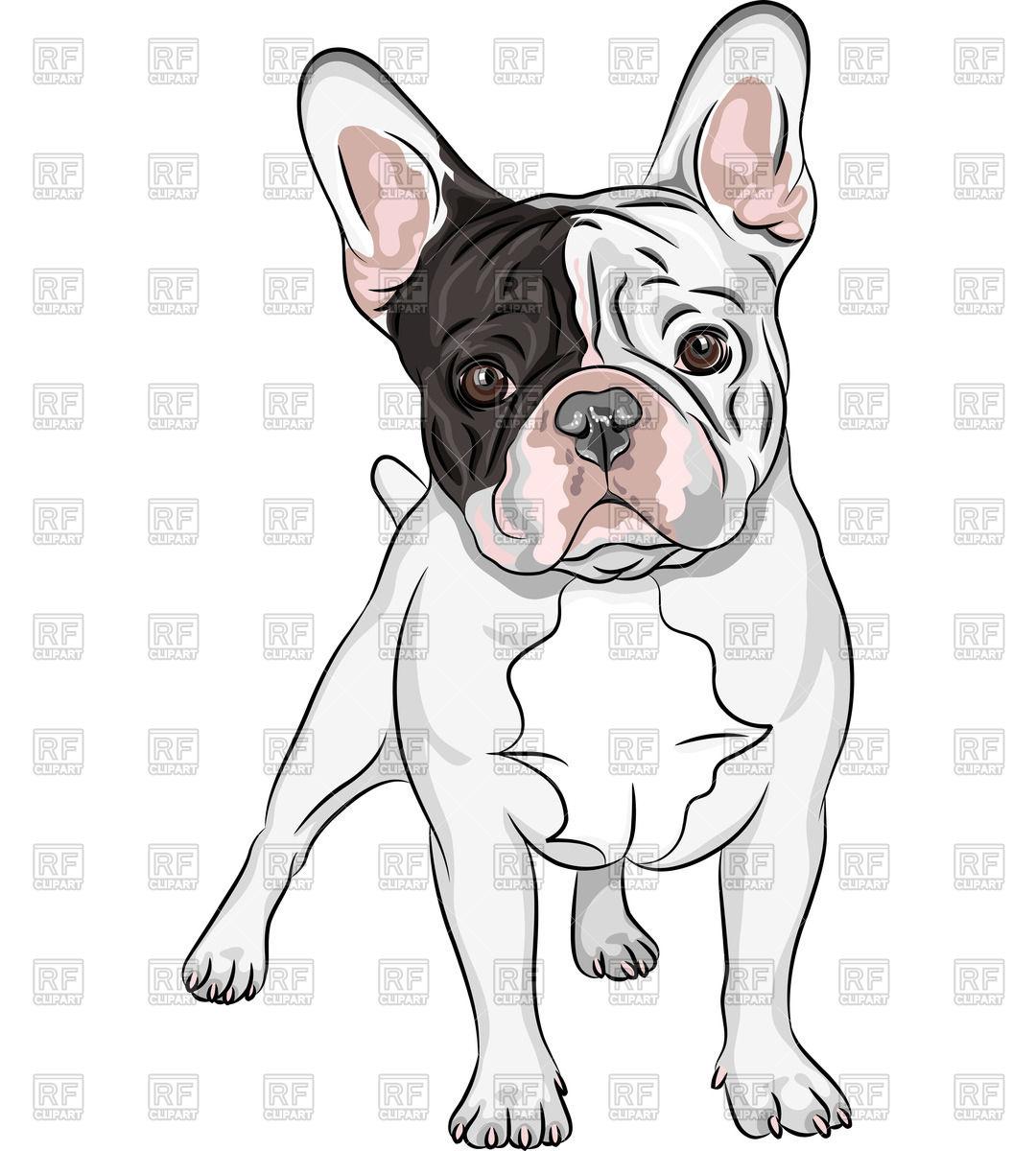 1080x1200 Closeup Portrait Of Dog