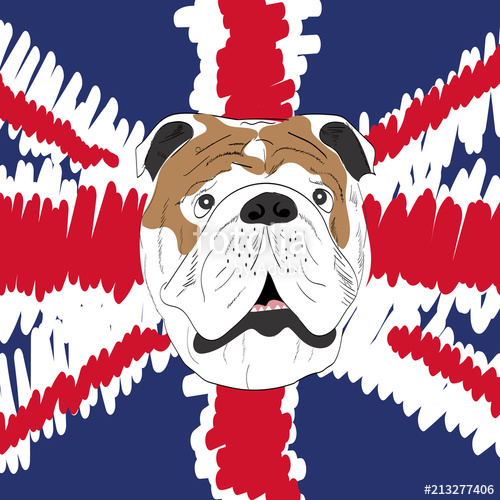 500x500 English Bulldog, Vector Illustration, Icon Stock Image And