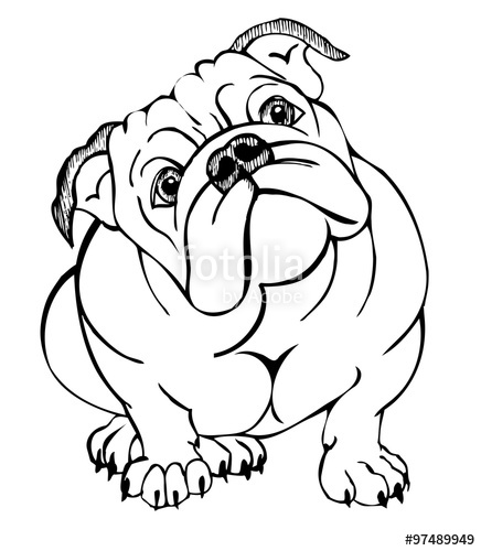 436x500 English Bulldog, Vector Illustration Stock Image And Royalty Free
