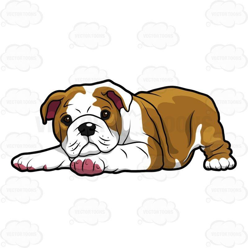 800x800 Bulldog Mascot Clipart Fresh Bulldog Vector Free Download Modern
