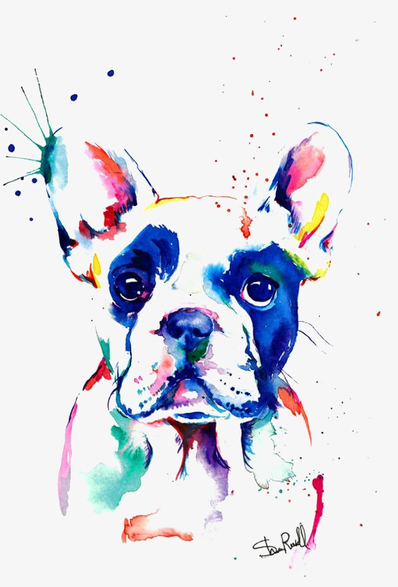 564x832 Bulldog Png, Vectors, Psd, And Clipart For Free Download Pngtree
