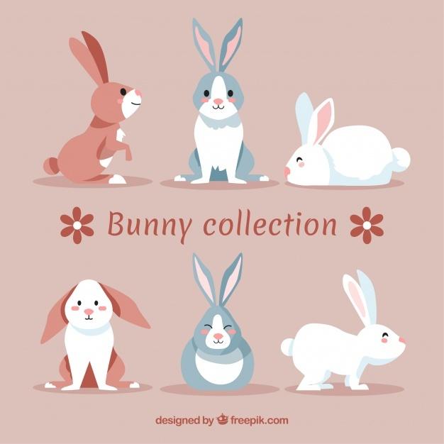 626x626 Rabbit Vectors, Photos And Psd Files Free Download