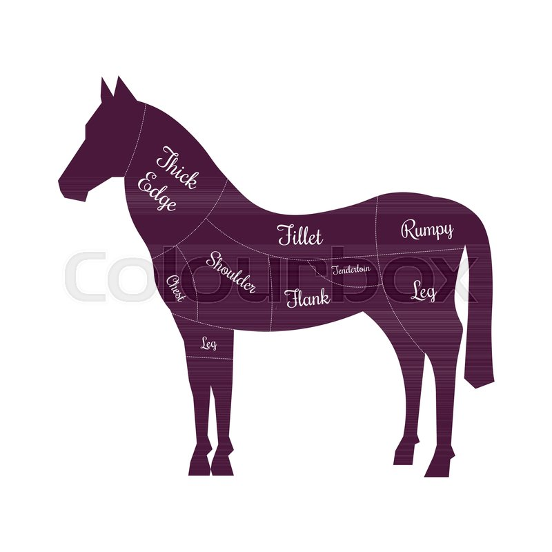 800x800 Horse Meat Cuts Butcher Vector Icon. Horse Silhouette For Butchery