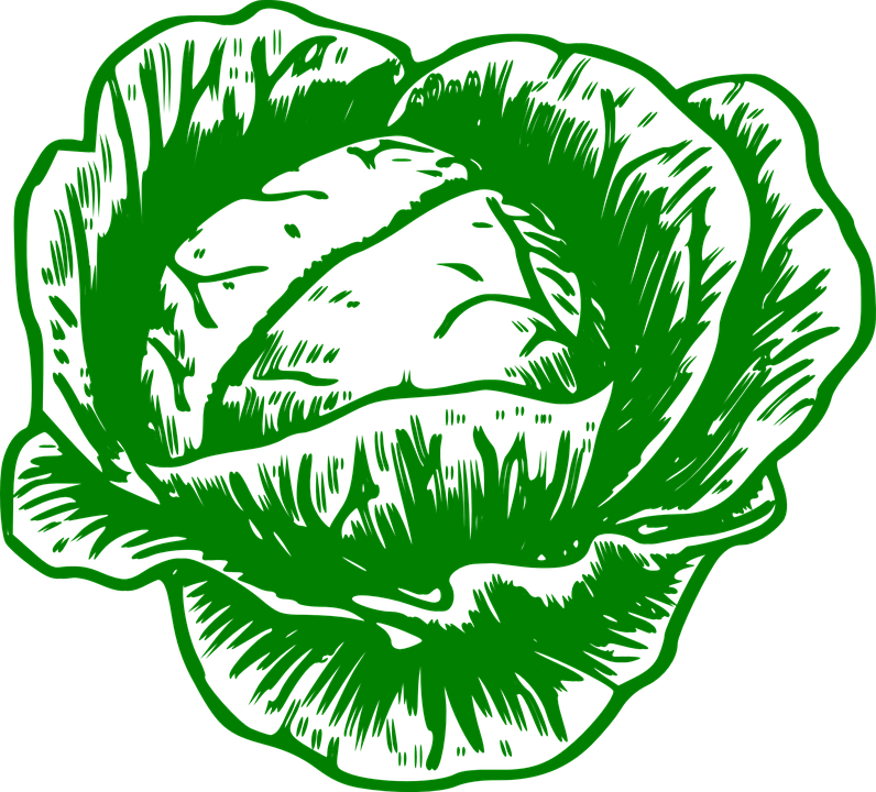 796x720 Cabbage Clipart Vector