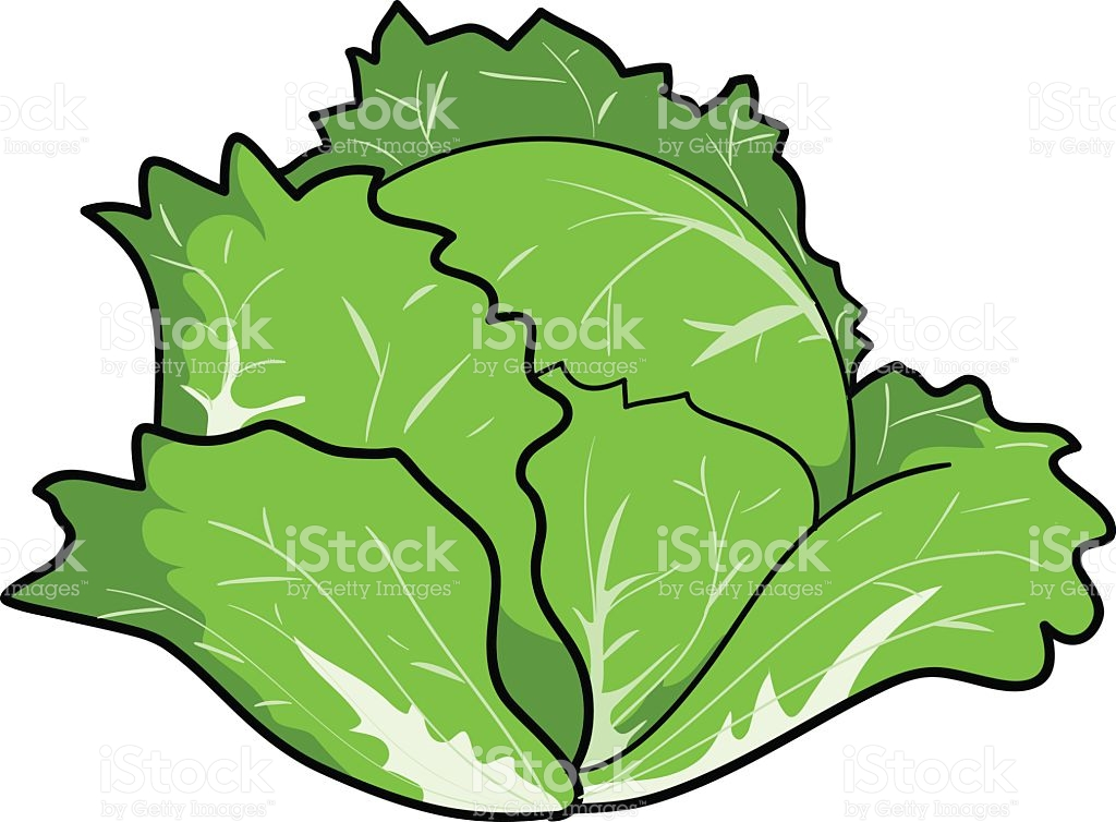 1024x754 Collection Of Free Cabbaging Clipart Vector. Download On Ubisafe