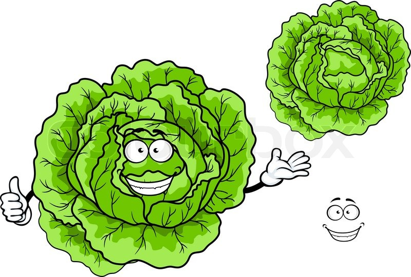 800x540 Happy Fresh Green Cartoon Cabbage Vegetable Character Isolated On
