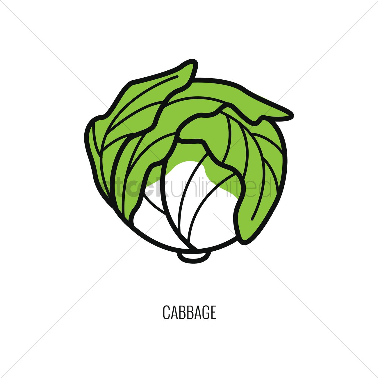 1300x1300 Cabbage Vector Image