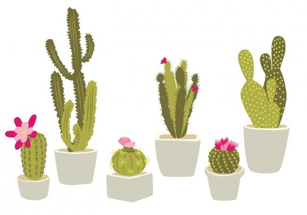 626x438 Cactus Vectors, Photos And Psd Files Free Download Journey In